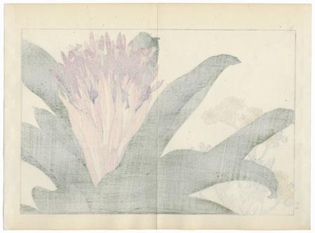 Ananas and Cineraria Maritima by Tanigami Konan (1879 - 1928)