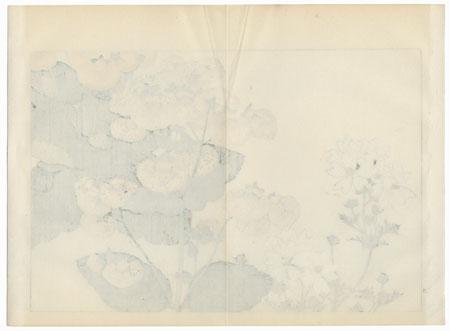 Calceolaria and Lavatera by Tanigami Konan (1879 - 1928)