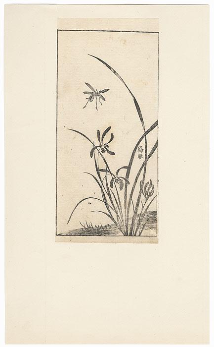 Insect and Irises by Edo era artist (unsigned)