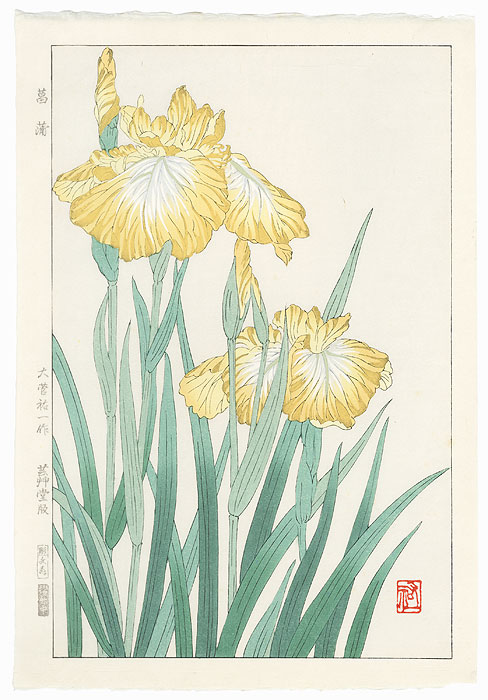 Yellow Iris by Kawarazaki Shodo (1889 - 1973)