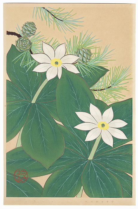 Canopy Plant, 1931 - 1932 by Inoue Masaharu