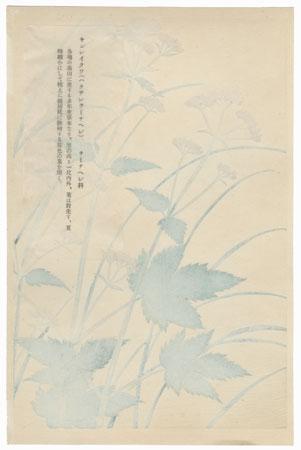 Yellow Flowers, 1931 - 1932 by Inoue Masaharu
