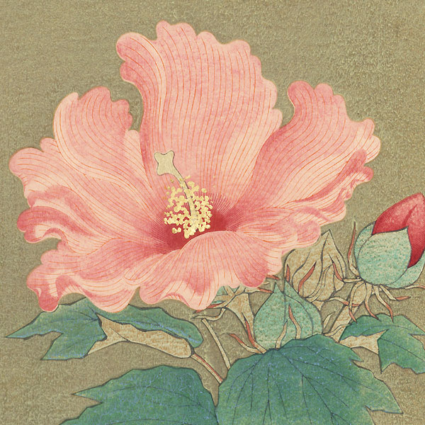 Hibiscus by Shin-hanga & Modern artist (not read)