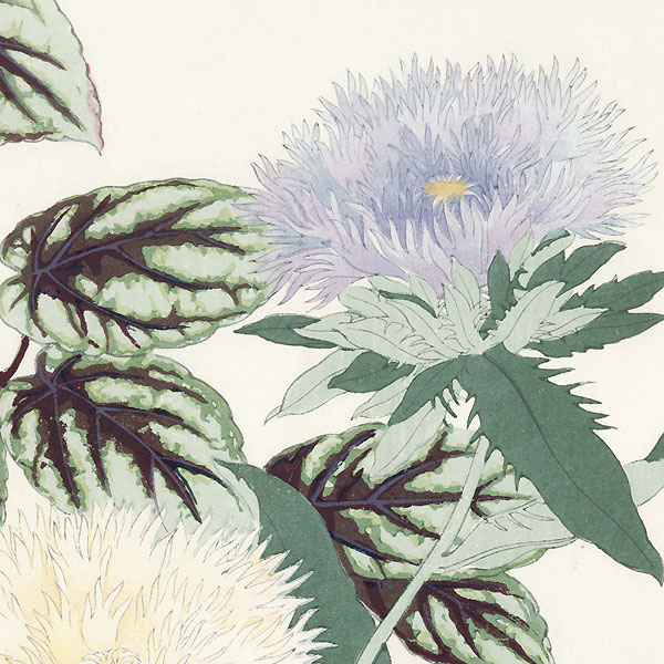 Stokesia and Vitis by Tanigami Konan (1879 - 1928)