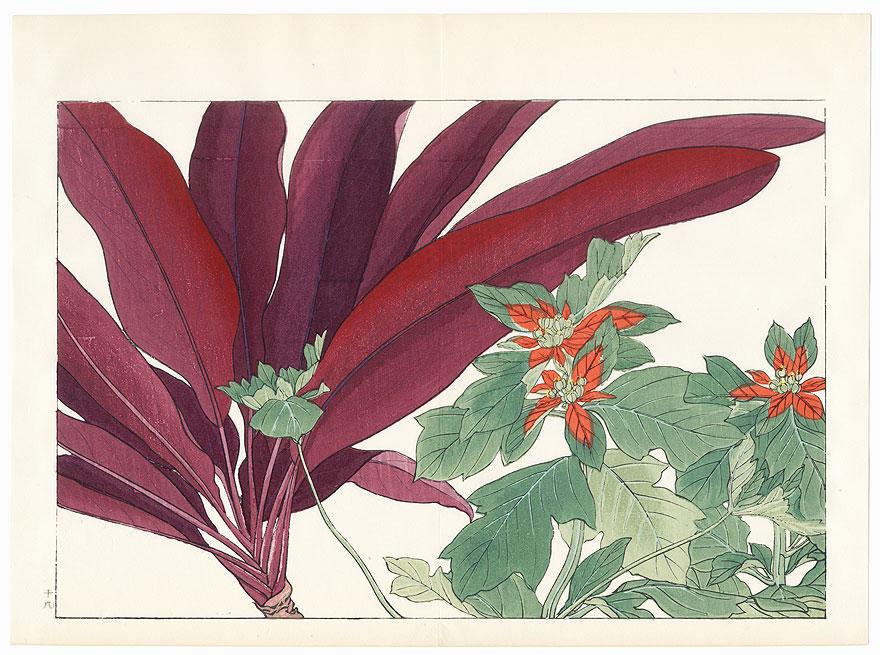 Poinsettia and Dracaena by Tanigami Konan (1879 - 1928)