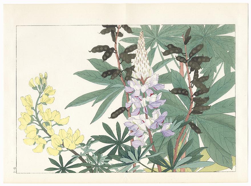 Lupinus by Tanigami Konan (1879 - 1928)
