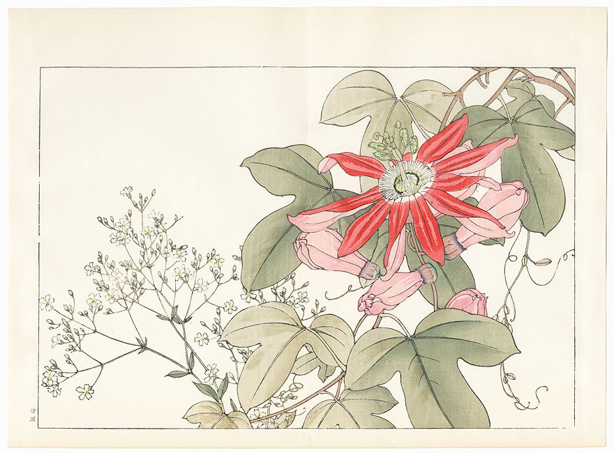 Passiflora and Gypsophila by Tanigami Konan (1879 - 1928)