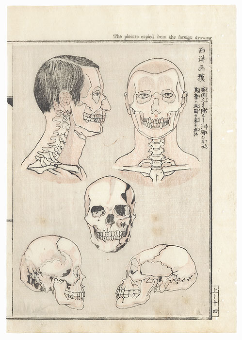 Skulls Copied from a Foreign Drawing by Kyosai (1831 - 1889)