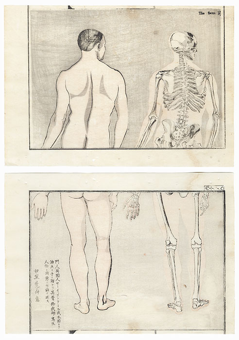 Back View of  Man and Skeleton Copied from a Foreign Drawing by Kyosai (1831 - 1889)
