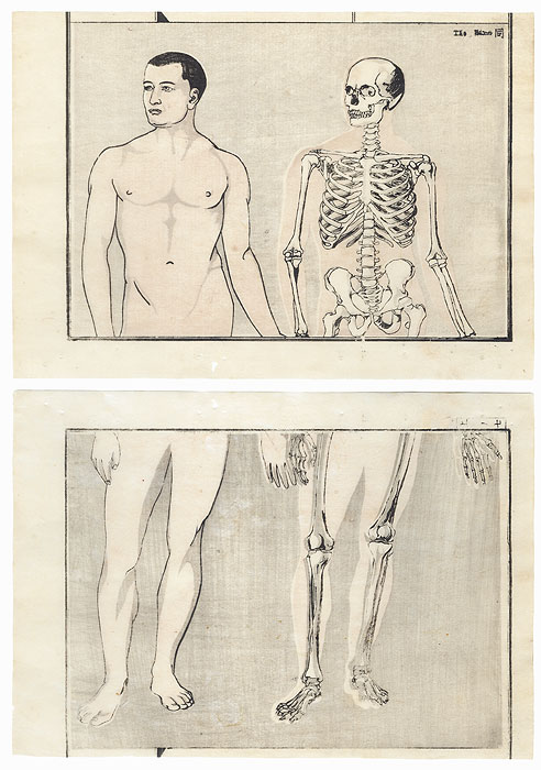 Front View of  Man and Skeleton Copied from a Foreign Drawing by Kyosai (1831 - 1889)