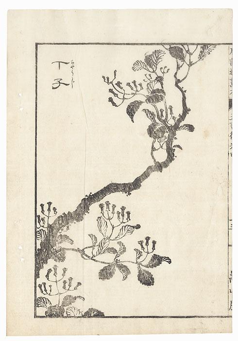 Flowering Tree, 1833 by Hokusai (1760 - 1849)