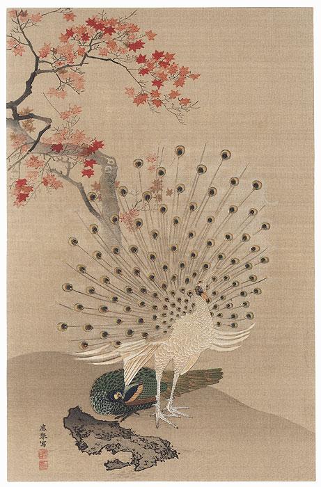 Peacock by Okyo Maruyama (1733 - 1795)