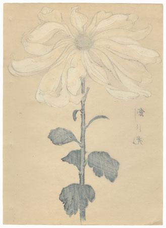 Light Sword (Tsurugi no hikari) Chrysanthemum by Keika Hasegawa (active 1892 - 1905)