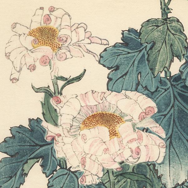 Sankuwamahi Chrysanthemum by Keika Hasegawa (active 1892 - 1905)