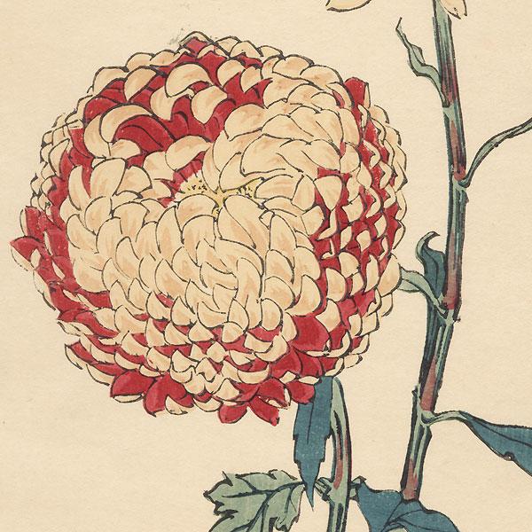 Golden Ball Chrysanthemum by Keika Hasegawa (active 1892 - 1905)