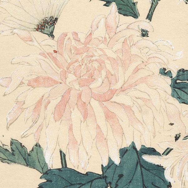 Chinese Lion (Karashishi) Chrysanthemum by Keika Hasegawa (active 1892 - 1905)