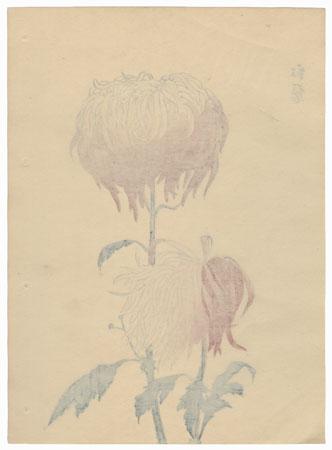 Crimson Beard Chrysanthemum by Keika Hasegawa (active 1892 - 1905)