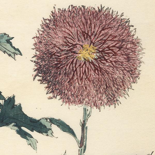 Thistle Chrysanthemum by Keika Hasegawa (active 1892 - 1905)