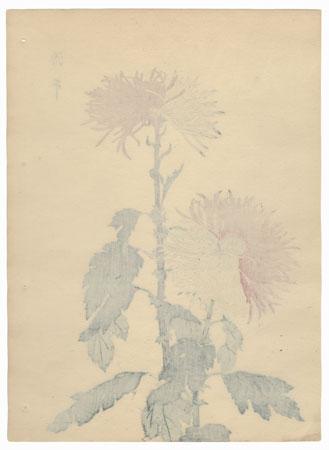The Genji and Heike Chrysanthemum by Keika Hasegawa (active 1892 - 1905)