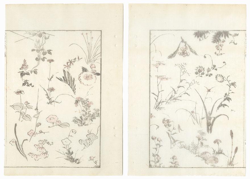 Plants by Hokusai (1760 - 1849)
