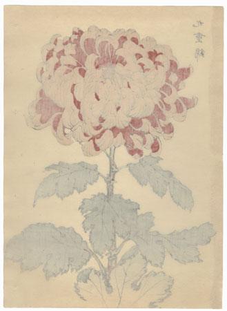 Nine-fold Gold Brocade Chrysanthemum by Keika Hasegawa (active 1892 - 1905)