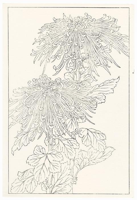 Chrysanthemums Key Block Print by Shin-hanga & Modern artist (unsigned)