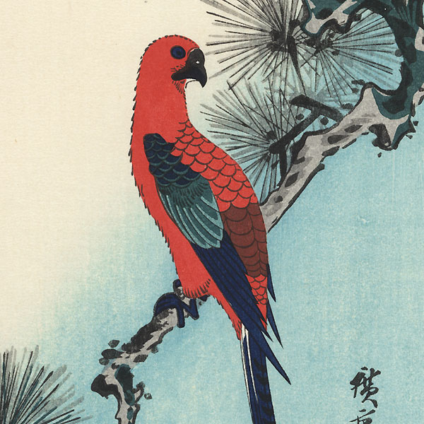 Macaw on Pine Branch by Hiroshige (1797 - 1858)