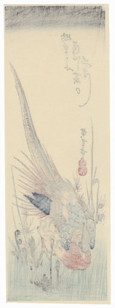 Golden Pheasant and Fern Shoots by Hiroshige (1797 - 1858)