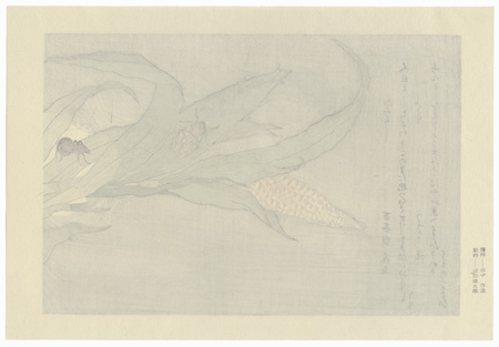 Evening Cicada and Spider by Utamaro (1750 - 1806)
