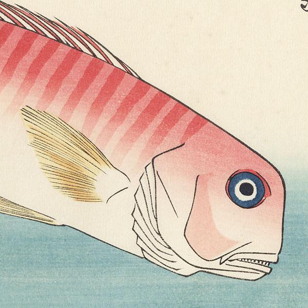 Amadai, Mebaru, and Wasabi Root by Hiroshige (1797 - 1858)