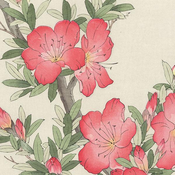 Pink Azalea by Kawarazaki Shodo (1889 - 1973)