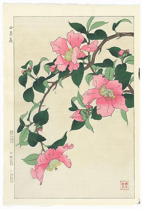 Pink Camellia by Kawarazaki Shodo (1889 - 1973)