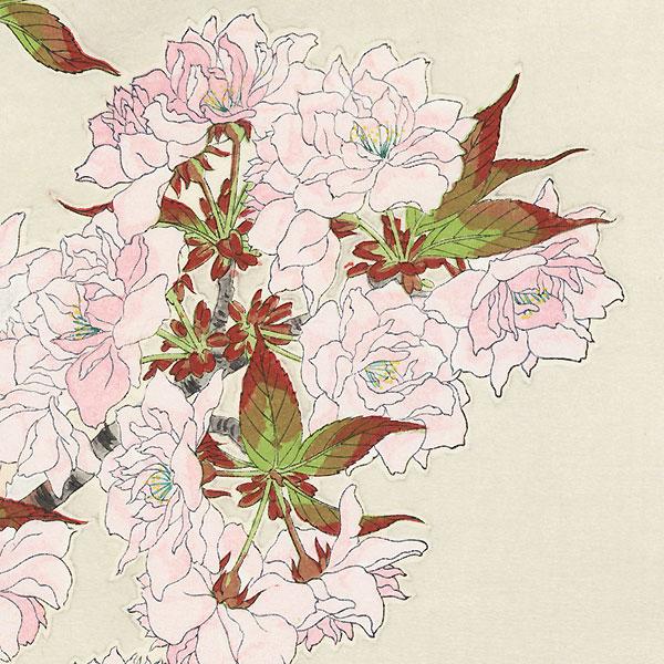 Pink Cherry Blossoms by Kawarazaki Shodo (1889 - 1973)