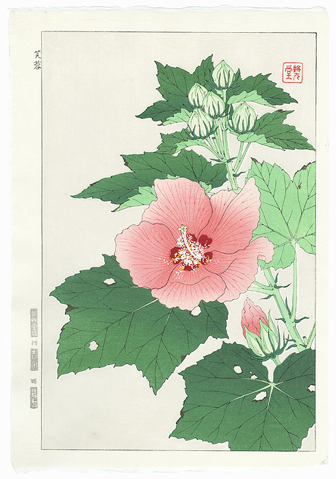 Hibiscus and Buds by Kawarazaki Shodo (1889 - 1973)