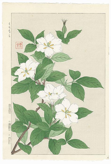 Cape Jasmine by Kawarazaki Shodo (1889 - 1973)