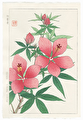 http://www.fujiarts.com/japanese-prints/DUPshodo/hibiscuspink2f.jpg