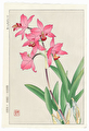 http://www.fujiarts.com/japanese-prints/DUPshodo/orchidsf.jpg