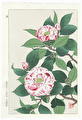 http://www.fujiarts.com/japanese-prints/shodo/camelliapw2f.jpg