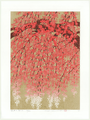 http://www.fujiarts.com/japanese-prints/Namiki/WeepingCherry19f.jpg