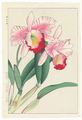 http://www.fujiarts.com/japanese-prints/shodo/orchids2f.jpg