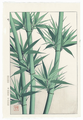 http://www.fujiarts.com/japanese-prints/shodo/bamboolf.jpg