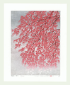 http://www.fujiarts.com/japanese-prints/Namiki/bWeepingCherry6f.jpg