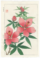 http://www.fujiarts.com/japanese-prints/shodo/hibiscuspinkf.jpg